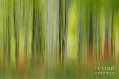 Photograph - Mysterious Forest 2 by Lilianna Sokolowska