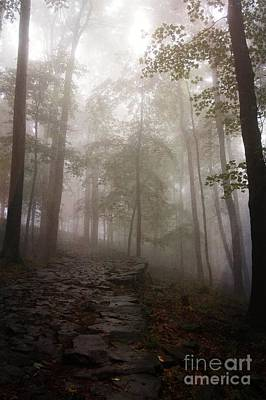 Mysterious Forest 5 Art Print