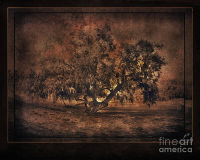 Mysterious Mesquite Art Print