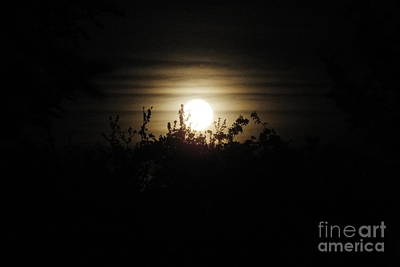 Photograph - Mysterious Moonlight by Ausra Huntington nee Paulauskaite