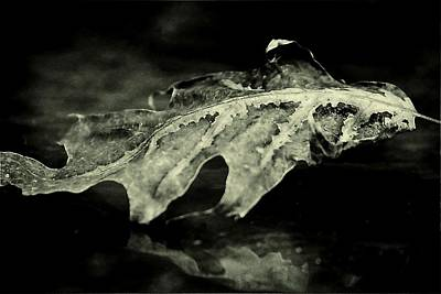Photograph - Mysterious Oak Leaf by Beth Akerman