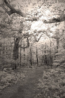 Photograph - Mystery Trail by David Troxel