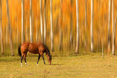 Tree Art Photograph - Mystic Autumn Grazing Horse by James BO  Insogna