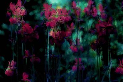 Flowers Photograph - Mystic Dreamery by The Art Of Marilyn Ridoutt-Greene