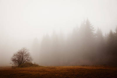 Photograph - Mystic Fog by Crystal Cox