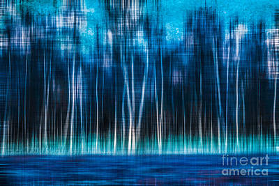 Woodland Violet Photograph - Mystic Forest by Hannes Cmarits