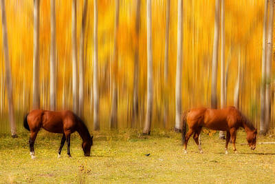 Photograph - Mystic Horses  by James BO Insogna
