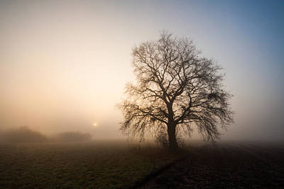 Mystic Morning Print by Davorin Mance