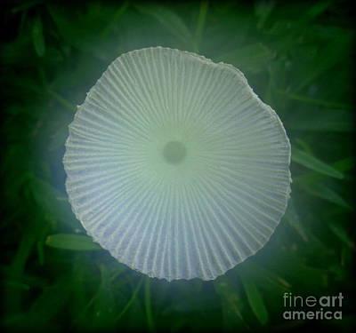 Photograph - Mystic Mushroom by Lew Davis
