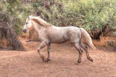Photograph - Mystic Wild Horse by Tam Ryan