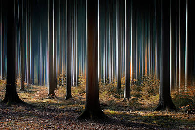 Column Photograph - Mystic Wood by Carsten Meyerdierks