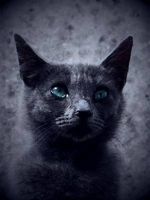 Donatella Photograph - Mystical Cat by Donatella Muggianu