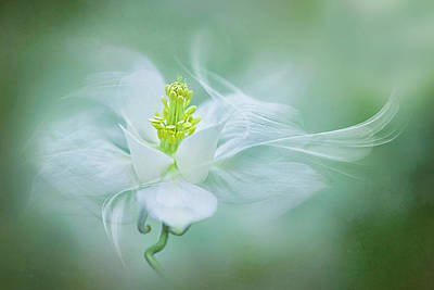 Close Up Photograph - Mystical by Jacky Parker