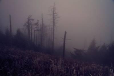 Mystical Morning Fog Print by Dan Sproul