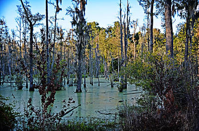 Photograph - Mystical Swamp by Linda Brown