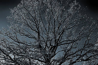 Mystical Tree Art Print by Christian Lagereek