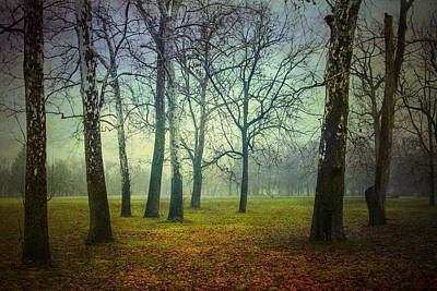 Laura James Photograph - Mystical Woodland by Laura James