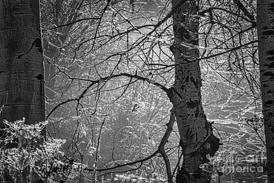 Mystifying Photograph - Mystified by Mitch Shindelbower