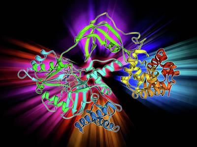 Molecular Structure Photograph - Nad-dependent Dna Ligase Molecule by Laguna Design