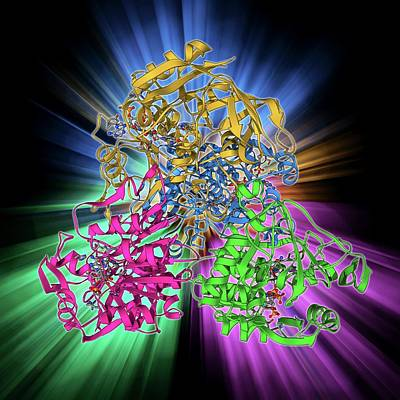 Molecular Structure Photograph - Nadp-dependent Alcohol Dehydrogenase by Laguna Design