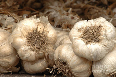 Photograph - Nafplio Greek Garlic 3 by Deborah Smolinske