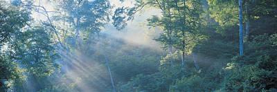 Dappled Light Photograph - Nagano Japan by Panoramic Images