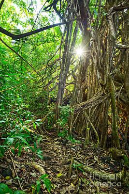 Giant Fern Photograph - Nahiku Jungle by Jamie Pham