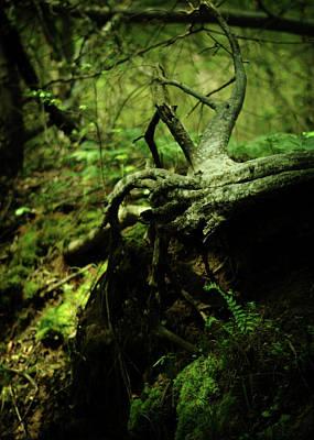 Tree Roots Photograph - Naked Awakening by Rebecca Sherman