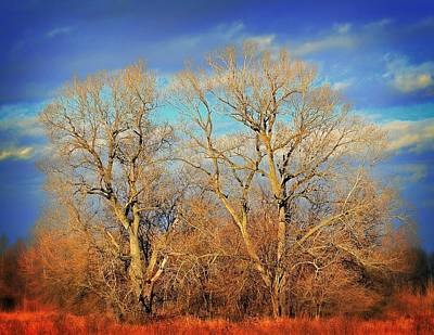 Naked Branches Art Print by Marty Koch