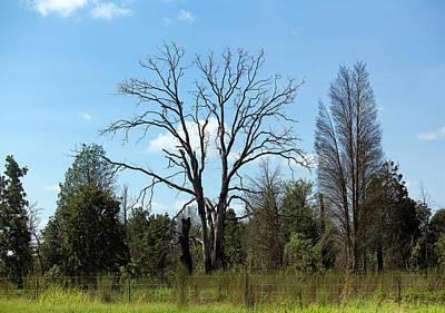 Naked Texas Trees Original