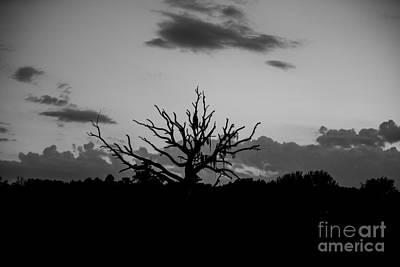 Photograph - Naked Tree by Mina Isaac