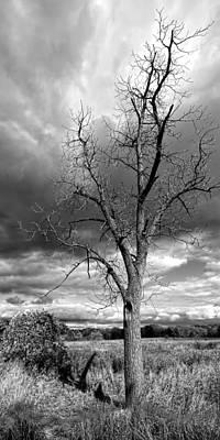 Naked Tree Art Print by Roger Swieringa