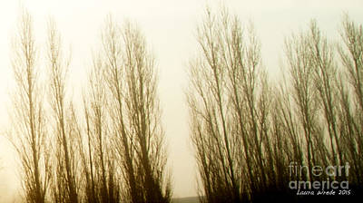 Photograph - Naked Trees 3 by Artist and Photographer Laura Wrede