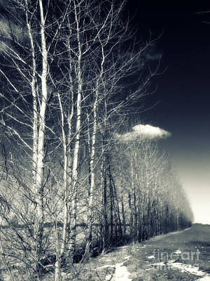 Aging Photograph - Naked Trees by Stelios Kleanthous