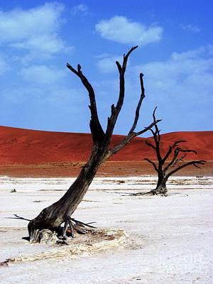 Namib Naukluft Art Print by Noa Yerushalmi