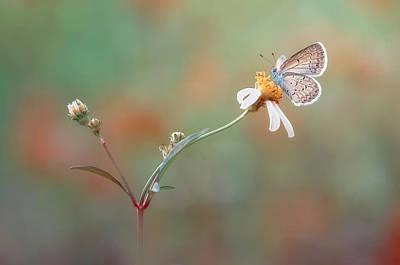 Bugs Photograph - Nangkring Indah by Adi Isna Maulana