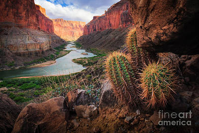 Rock Photograph - Nankoweap Cactus by Inge Johnsson