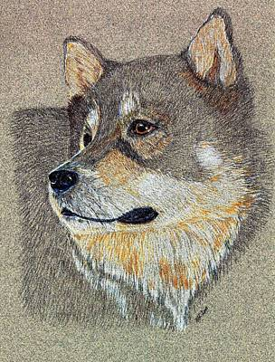 Drawing - Nanook by Stephanie Grant