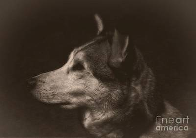 Photograph - Nanuk Of The North by Marjorie Imbeau
