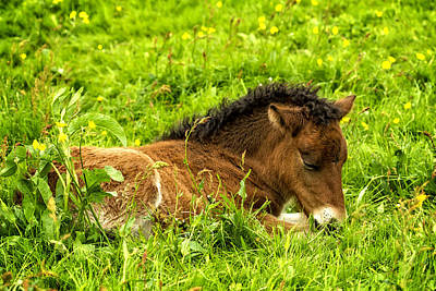 Photograph - Nap In The Buttercups by Joan Davis