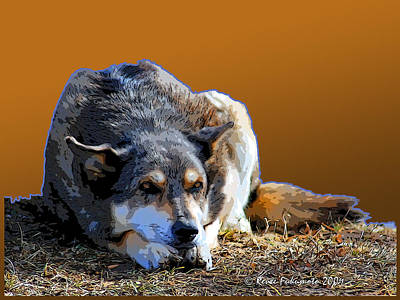 Canines Digital Art - Nap In The Sunshine by Renee Forth-Fukumoto