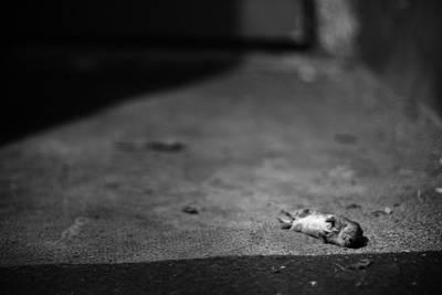 Overtime Photograph - Nap Overtime by Matti Ollikainen