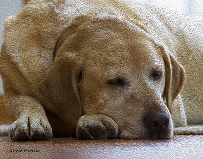 Retrievers Digital Art - Nap Time 1 by Gerald Marella