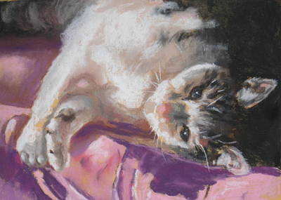 Nap Time For Kitty Art Print by Janice Harris