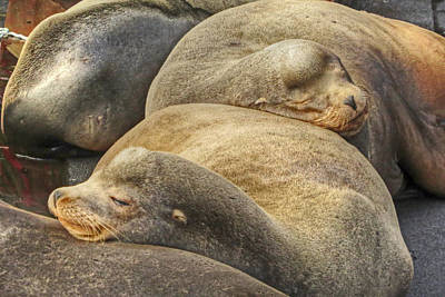 Bay Photograph - Nap Time by Kristina Rinell