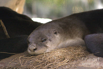 Photograph - Nap Time by Michael Creamer