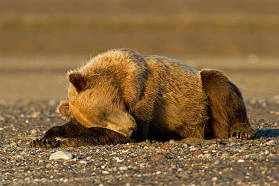 Photograph - Nap Time by Shari Sommerfeld