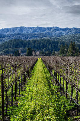 Photograph - Napa Valley  by Dan Hefle