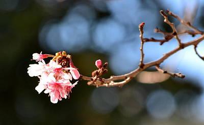 Photograph - Napa Valley In Spring by Dean Ferreira