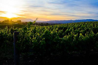 Photograph - Napa Valley by John McGraw